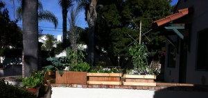 Planter Boxes of Vegetables
