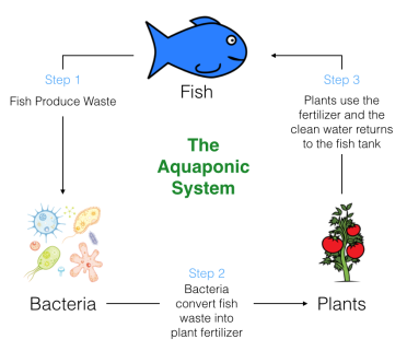 How Aquaponics Works