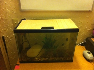 DIY Aquaponics: Aquarium Cover