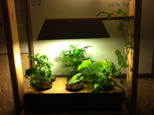 DIY Aquaponics: Attaching the Grow Light