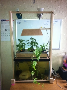 DIY Aquaponics: The Finished Aquaponics System