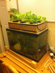 DIY Aquaponics: Attaching the Water Pump