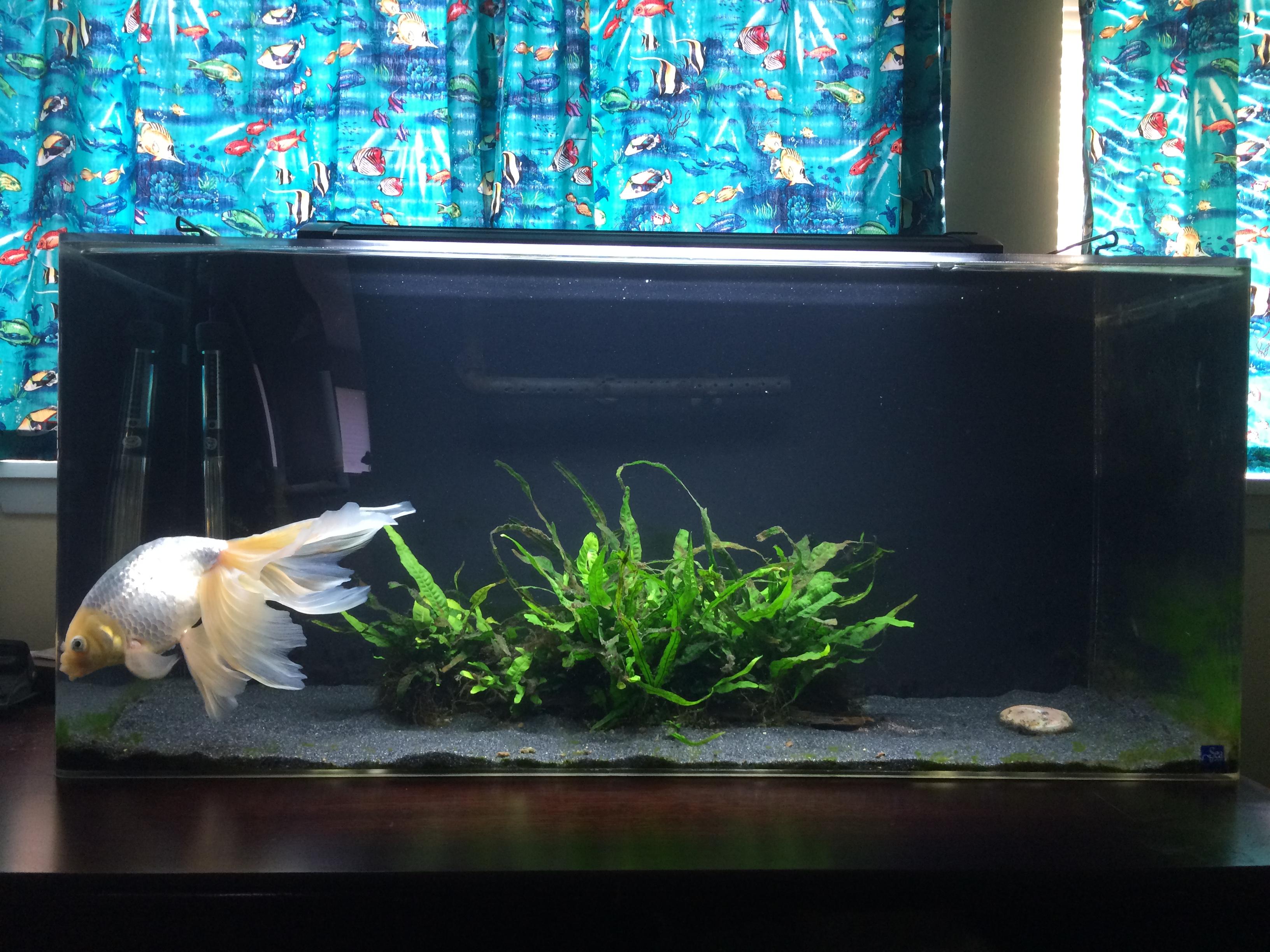 New 40 gallon tank mutualistic symbiosis for 2 gallon fish tank
