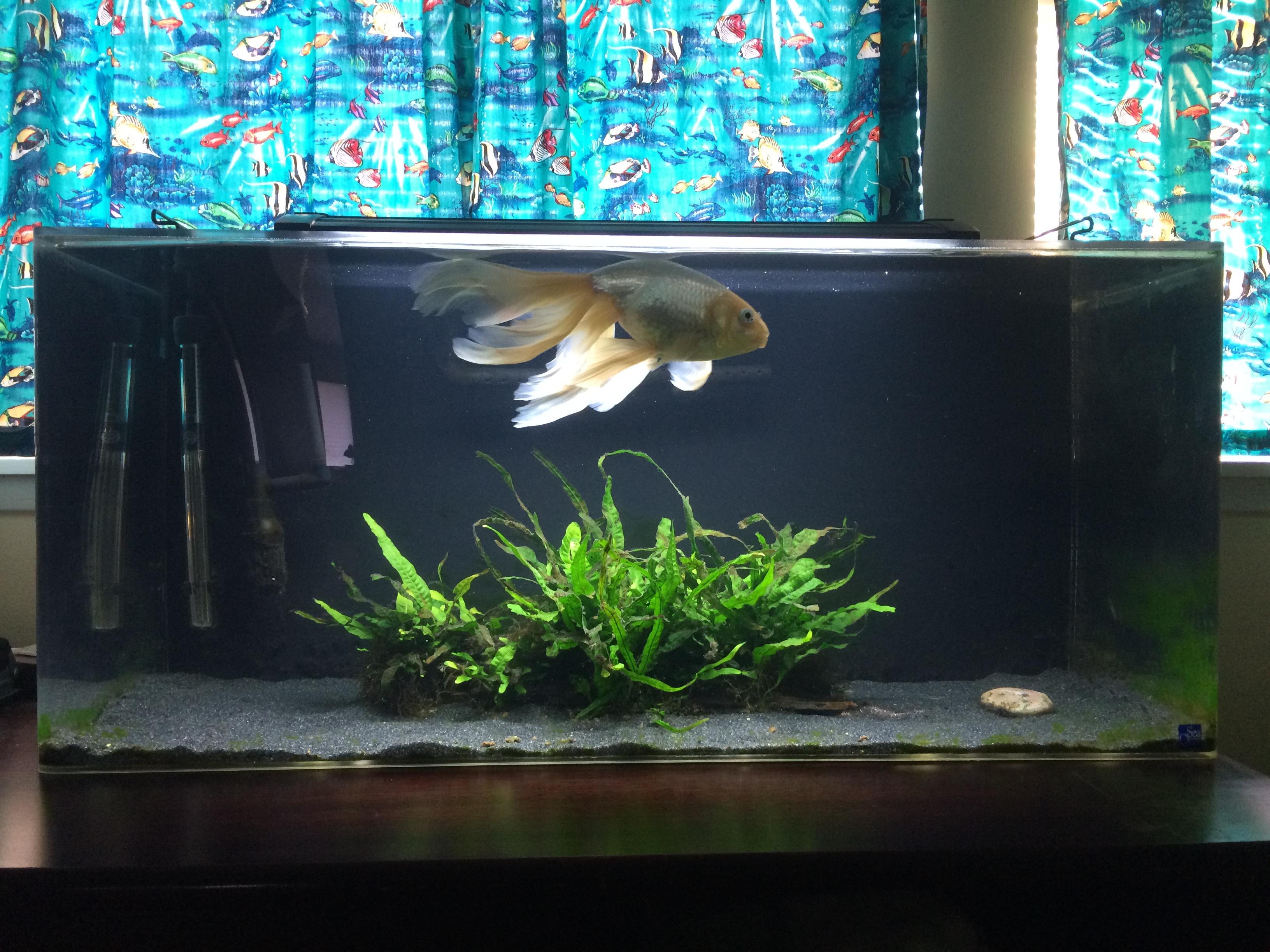 Fish tank mutualistic symbiosis for Two gallon fish tank